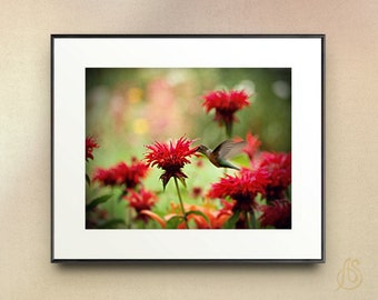 Hummingbird art print - hummingbird photograph art print - red flower photography - red floral art print