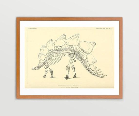 Stegosaurus Dinosaur Illustration Vintage Prints Antique Nature Print Natural History Art