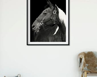 Horse Photo with Black Background, Paint Horse Equine Photography, Physical Print