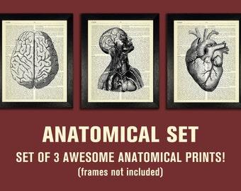 ANATOMICAL SET, Anatomy Print Set, Medical Wall Art, Dictionary Art Prints, Gifts for Boyfriend, Set of Posters, Vintage Anatomy Artwork