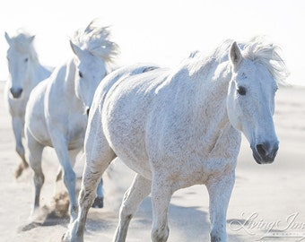 Three Run on the Beach - Fine Art Horse Photograph - Horse - Camargue - Fine Art Print