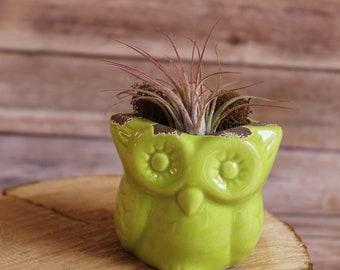 Green Owl Terrarium