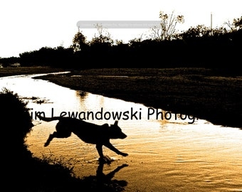 "Australian cattle dog silhouette - 12"" x 18"" canvas print"