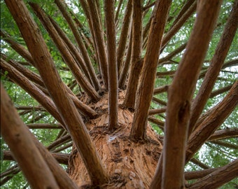 Richmond Park Photograph - Isabella Plantation - Nature Photography - Tree - London