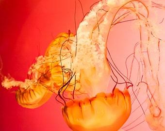 Jellyfish Wall Art Print   red orange home decor   Nautical decor   nature   color photograph   beach   sea   ocean   water   sea creature