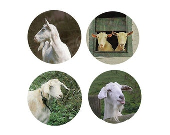 Goat Magnets:  4 Charming Goats for your home, your collection,  or to give as a unique gift
