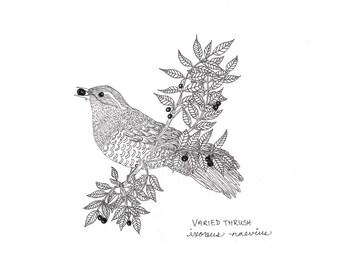 ORIGINAL bird drawing