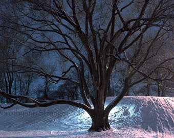 Bowling Green, Ohio, Elm tree, Sledding hill, tree on hospital hill, nostalgia, small town fun, night shot, winter