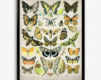 Butterflies Vintage Print 3 - Butterflies Poster - Butterfly Art - Home Decor - Home Art - Kitchen - Kitchen Art