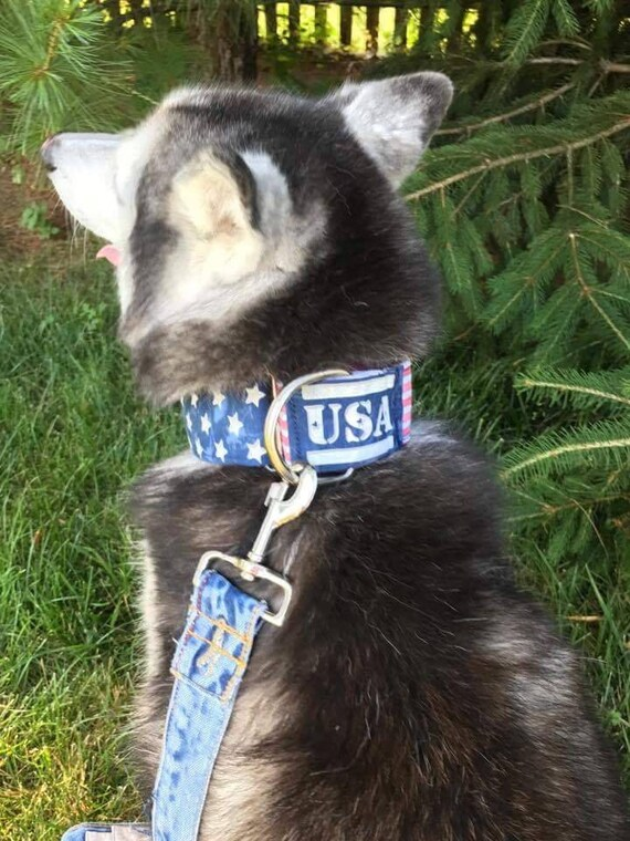 Patriotic, Red, White and Blue, American Flag Martingale Dog Collar, USA Dog Collar