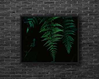 Fern Photo - Botanical Photo - Fern Paper Photo - Green - Fern Leaf Photo - Paper Photo Print - Botanical Wall Art - Botanical Wall Decor