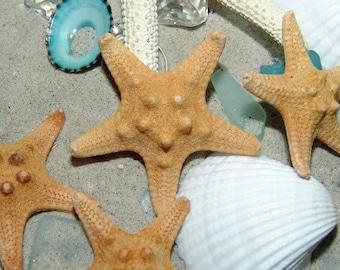 Loose Natural Amoured Knobby Tan Starfish Small Medium 1 2 3 4 5 inch DIY Decorating Crafts Weddings Seashell Art Frames Ocean Shell Decor
