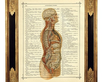 Anatomy Dictionary Art Torso Medical History - Vintage Victorian Book Page Art Print Steampunk