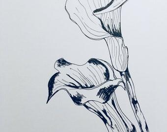 Calla lilies illustration