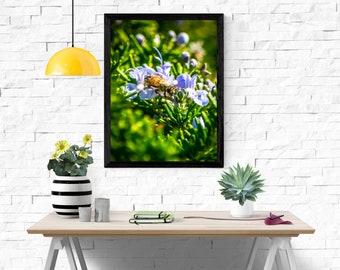 Nature, honeybee, garden, flower, plant, lavender, bee, beauty, natural, summer, spring, purple, floral
