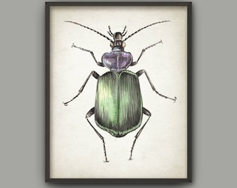 Beetle Watercolor Art Print, Insect Painting, Green Beetle Room Decor, Beetles Home Decor, Forest Beetle Poster, Kids Room Bug Wall Art B768