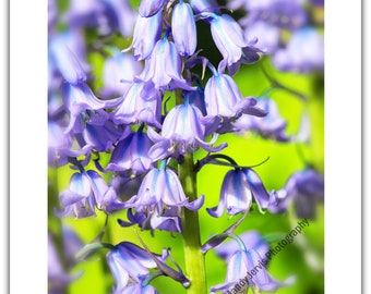 Greetings Card Birthday / Blank Notelet - Bluebell Flower, Garden, Nature, Spring, Blue, Lilac, Purple, Woodland
