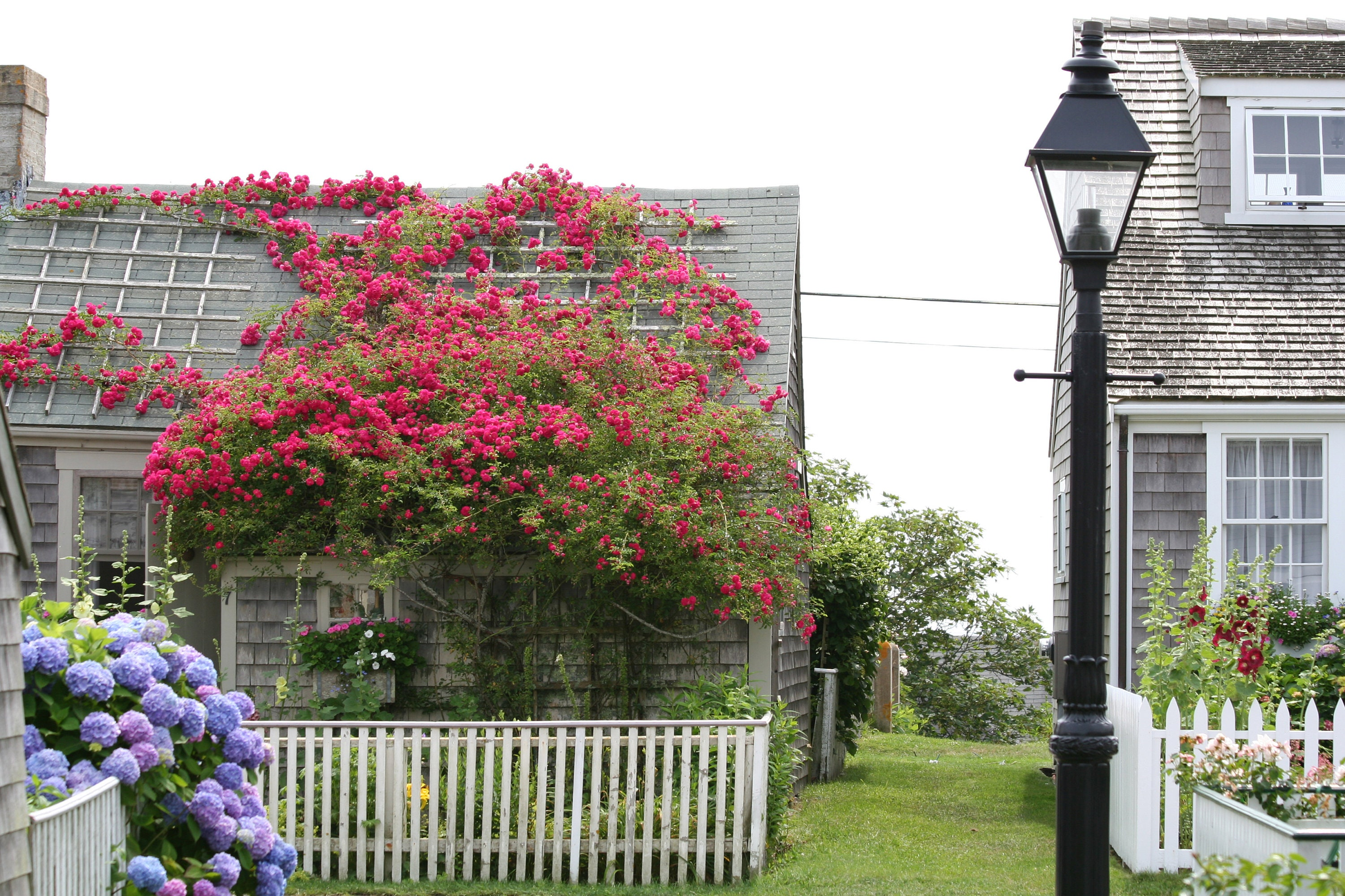 overgrown the garden cottages pinteres english cottage more nantucket pin