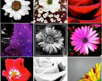 Flower Photography Prints