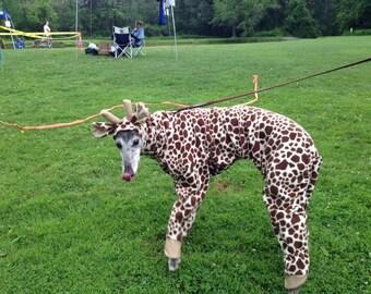 Giraffe Greyhound , Giraffe costume