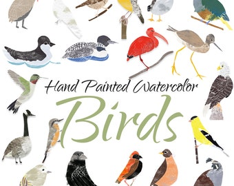 Birds Handpainted Watercolor Clipart, Bird Digital Clipart