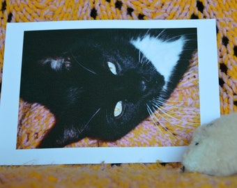 Color photograph of a tuxedo cat