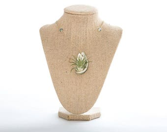 Iridescent Air Plant Shell Necklace