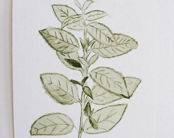 Mint Leaves Watercolor