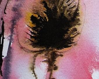 Teasels/Watercolour Seedheads