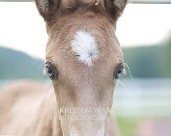 Foals, Baby Horse, Horse Photos, Foal Photo, Equine Art, Blue Eyes