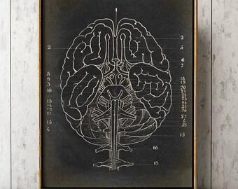 BRAIN ANATOMY POSTER, Brain Chart, Scientific Illustration, Anatomical Drawing, Anatomy Print, Medical Art, Doctor, Anatomy Art
