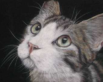 Custom Cat Portrait, In Pastels on Velour Paper, from your photos April 2018