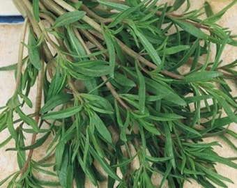 100 Summer Savory Seeds-1255