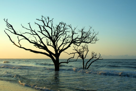 Tree in the Surf at Botany Bay (canvas)