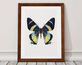 Butterfly Wall Art Print, Butterfly Print, Butterfly, Wall Art Print, Wall Art, Tropical Print, Wall Decor, Print, Fine Art Print