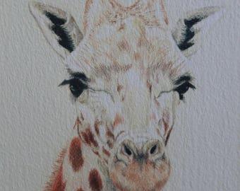 giraffe print, limited edition, giclee print, giraffe