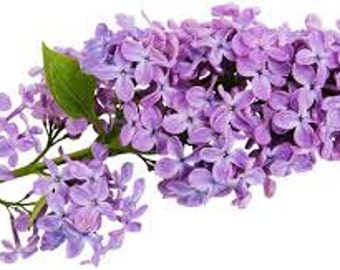Lilac hand-blended Oil for 5 mL, 1/2 oz, or 1 ounce glass bottle - diffuser aromatherapy oil, dryer ball scents, diffuser jewelry refill oil