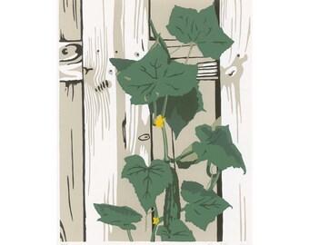 Cucumber plant, silkscreen print