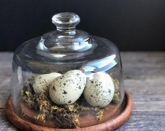 Vintage Glass Cloche Nest Repurposed Robins Egg