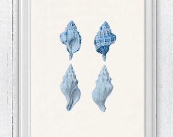 Sea shell collection in blue-  Sea life print -  seashells wall art home decor -A 4 print SAS202