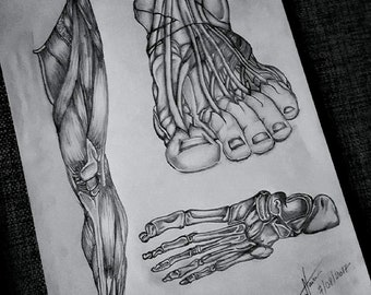 The Anatomy of the Foot