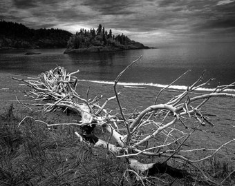 White Driftwood Tree Trunk laying on Driftwood Beach by WaWa in Ontario Canada No.82951 A Black and White Beach Landscape Photograph