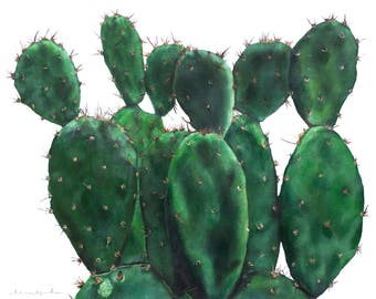 Canvas Print of Patti the Paddle Cactus
