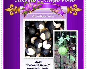 VikkiVines~LOVE IN A PUFF ~ Sacred Vine of India ~ Unique White Heart on Black Seeds ~ Victorian Garden Favorite ~ Grow with Love~ 10 Seeds!