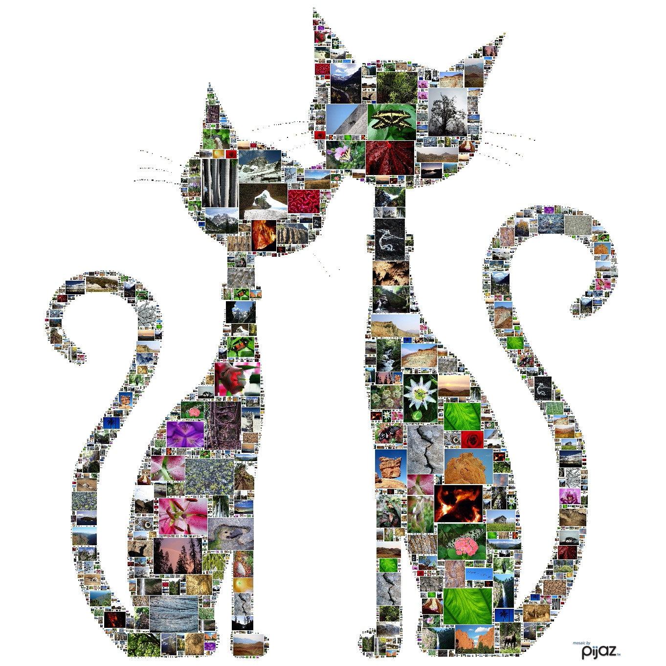 Gato mosaico Poster-collage personalizado de OOAK de tus fotos