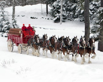 Clydesdale Team In Snow 11 x 14 / 11x14 GLOSSY Photo Picture