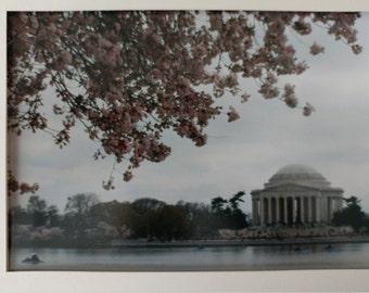 Photo: Cherry Blossom Tidal Basin