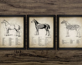 Vintage Horse Anatomy Print Set Of 3 - Horse Anatomy Illustration - Equestrian Printable Art - Set Of Three Prints #684 - INSTANT DOWNLOAD