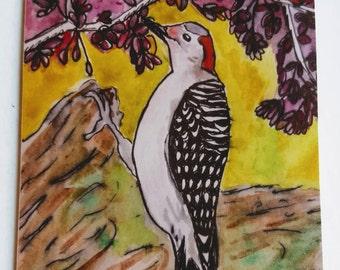 Red-Bellied Woodpecker Greeting Card (blank inside)
