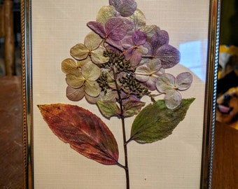 Framed Pressed Flower- Hydrangea